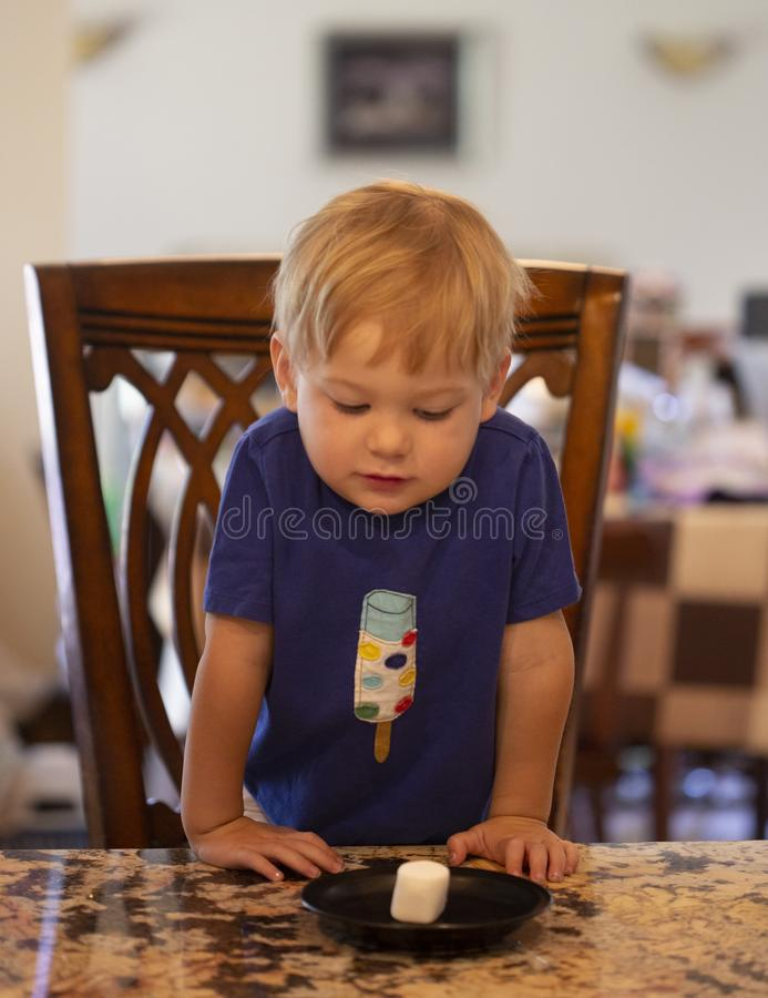 Free Young Child Sitting At A Table Waiting Patiently For A Marshmallow Royalty Free Stock Photography - 168445837