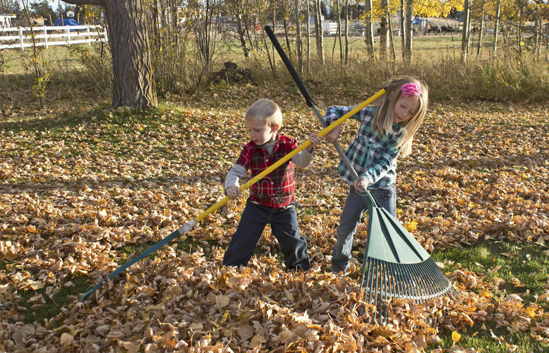 Young Children Raking Autumn Leaves. A boy and a girl raking a big pile of autumn leaves royalty free stock image