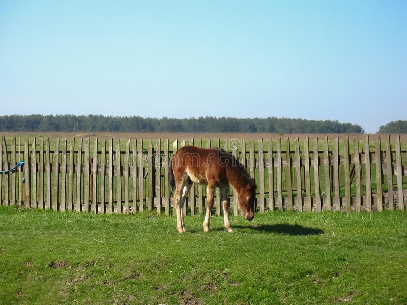 Young Colt in farm. Young colt happy foal in garden stock photos