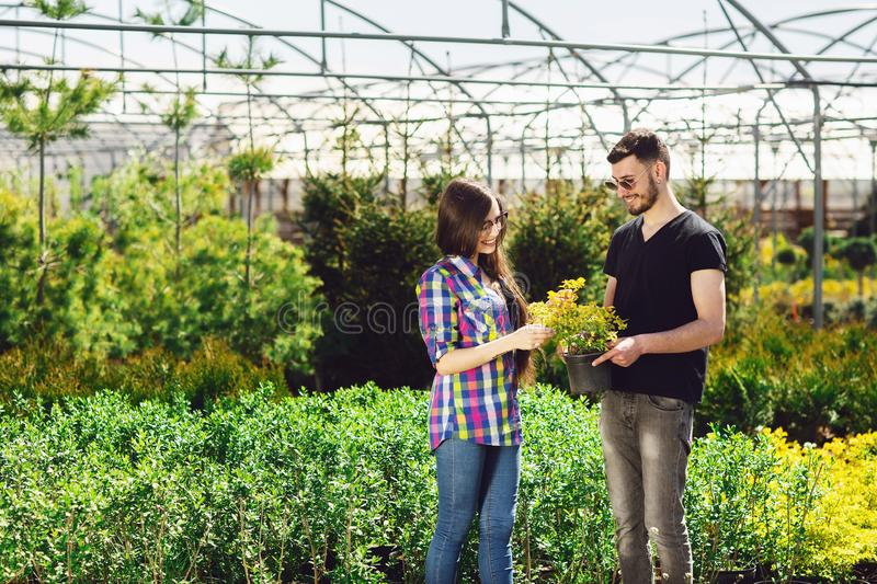 A young couple, a boy in a black T-shirt and a girl in glasses, keep a pot with a green plant. Shopping in a greenhouse.  royalty free stock images