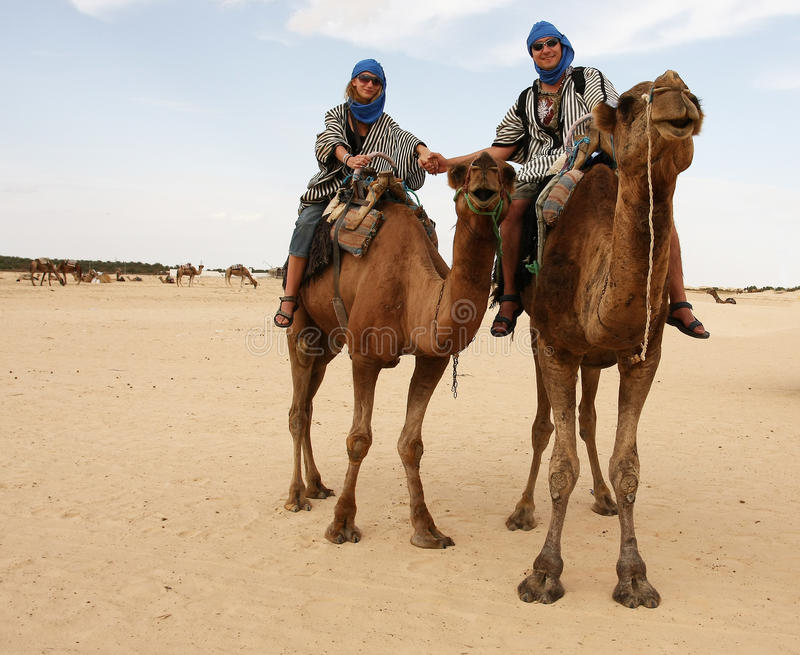 Young couple on camels royalty free stock images