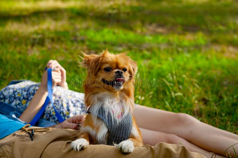 Young couple enjoying with a dog in a city park. stock photography
