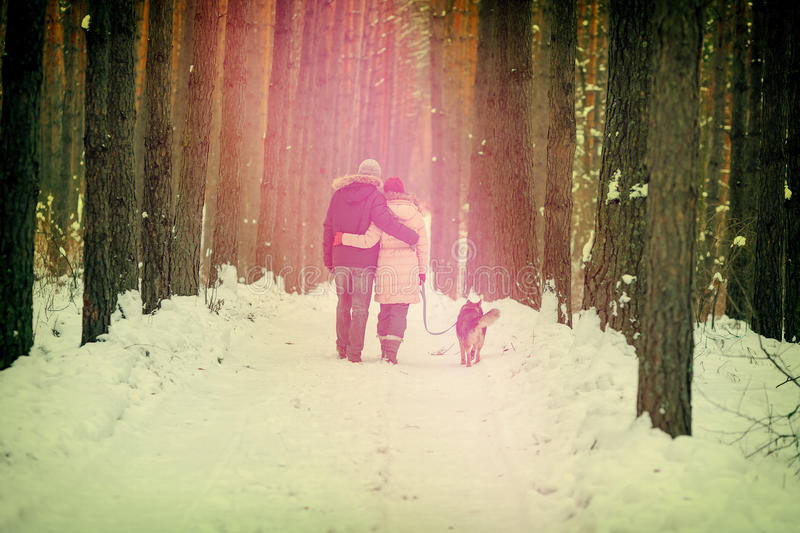 Young couple in love with dog walking in winter forest. Young hugging couple in love with dog on the leash walking outdoor in winter forest at sunset royalty free stock photo