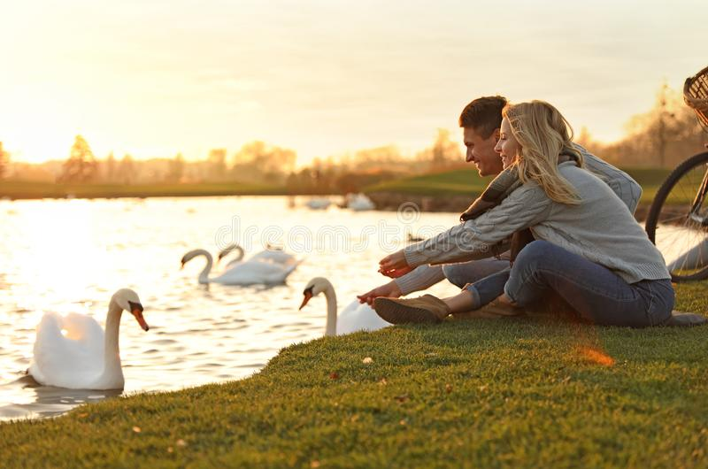 Young couple near lake with swans. Perfect place for picnic. Young couple near lake with swans at sunset. Perfect place for picnic stock image