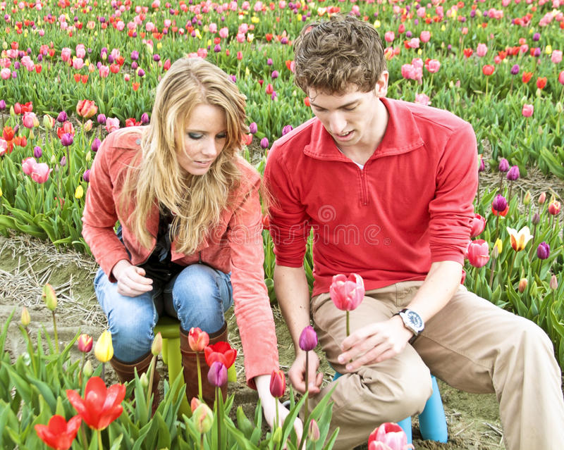 Young couple picking tulips stock photo