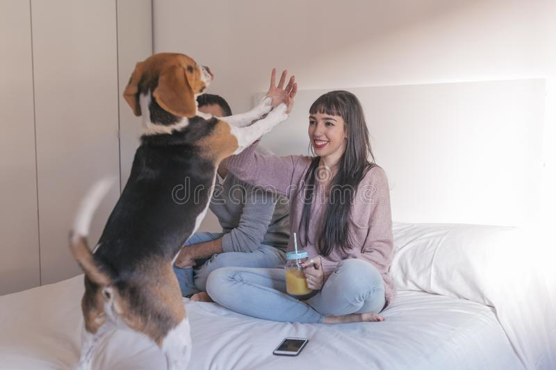 young couple sitting on bed, having fun and playing with their cute beagle dog. Breakfast time. Home, indoors royalty free stock photo
