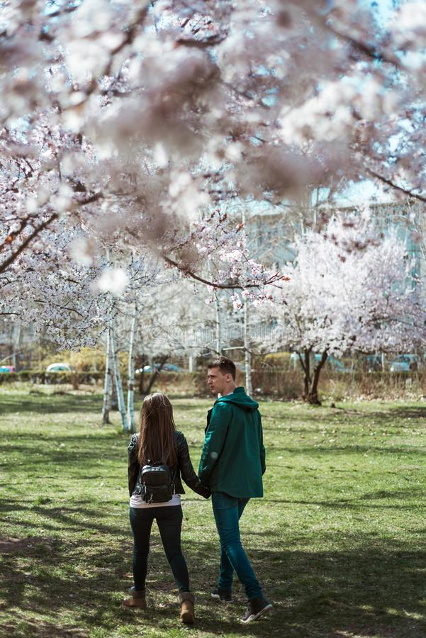 Young couple walking among cherry blossoms royalty free stock photos