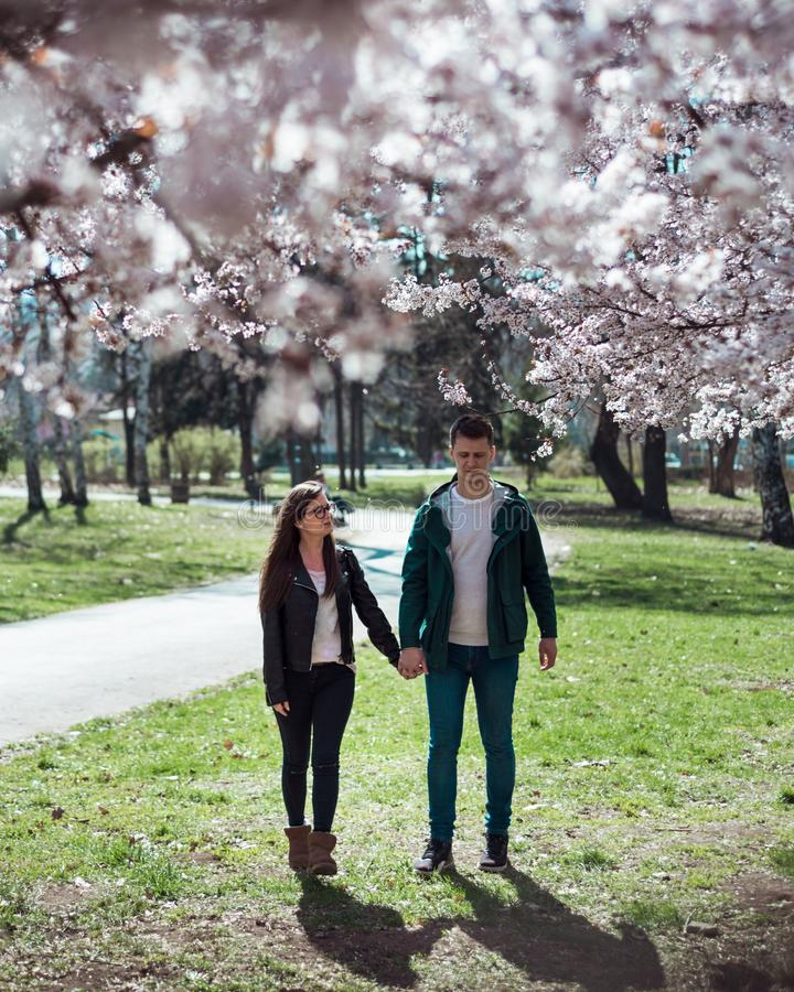 Young couple walking among cherry blossoms stock photography