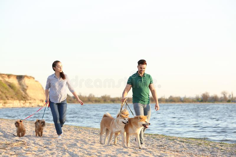 Young couple walking their adorable dogs royalty free stock image