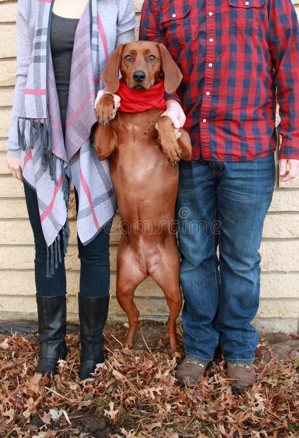 Young couple wearing plaid and boots take a holiday photo with their red bone coon dog in a red scarf outdoors in the leaves royalty free stock photography