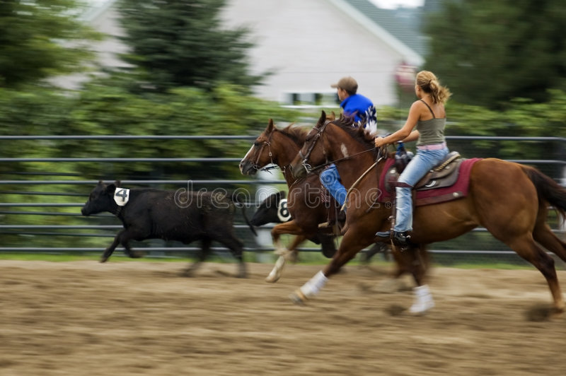 Young Cowhands Rodeo Panning and Motion Blur. Young cowboy and cowgirl chase calves at county fair rodeo - panning and motion blur stock photography