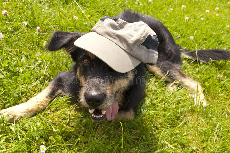 Download Young crossbreed Dog stock image. Image of serenity, cheeky - 30313287