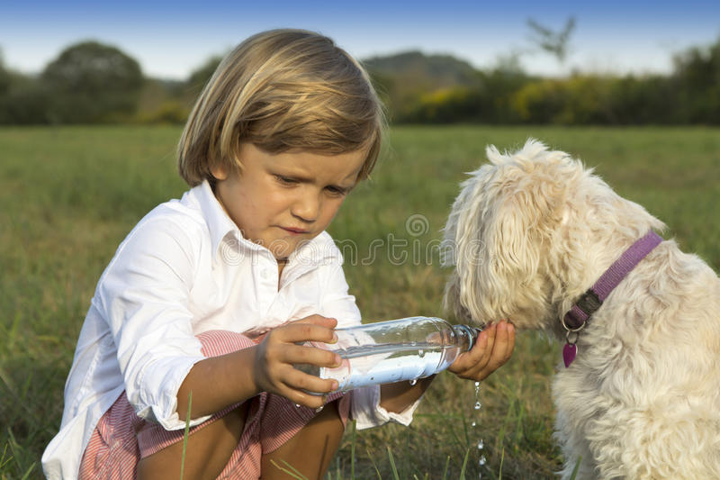 Young cute boy giving water to his dog. Whilst playing on the grass stock image