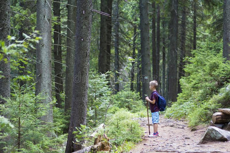 Young cute child boy with hiker backpack and stick standing alone on lit by bright sun mountain narrow path in dense pine forest. On warm summer day. Tourism stock photography