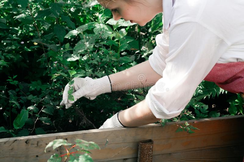 Young cute lady working at the garden. Wearing pink linen apron and white gloves stock image