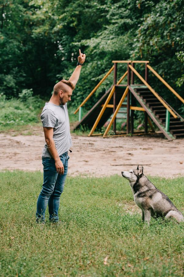 Young cynologist gesturing and working with obedient husky dog. In park royalty free stock photos