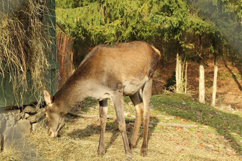 What Deer Love to Eat