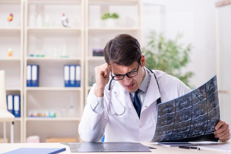 The young doctor looking at x-ray images in clinic. Young doctor looking at x-ray images in clinic stock image