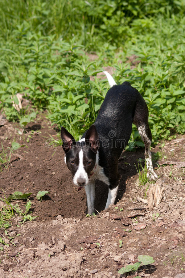 Young dog in action stock photography