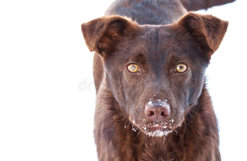 Young dog outdoors. stock photography