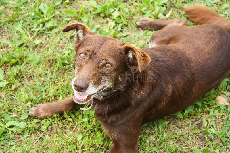 Young dog outdoors. royalty free stock images