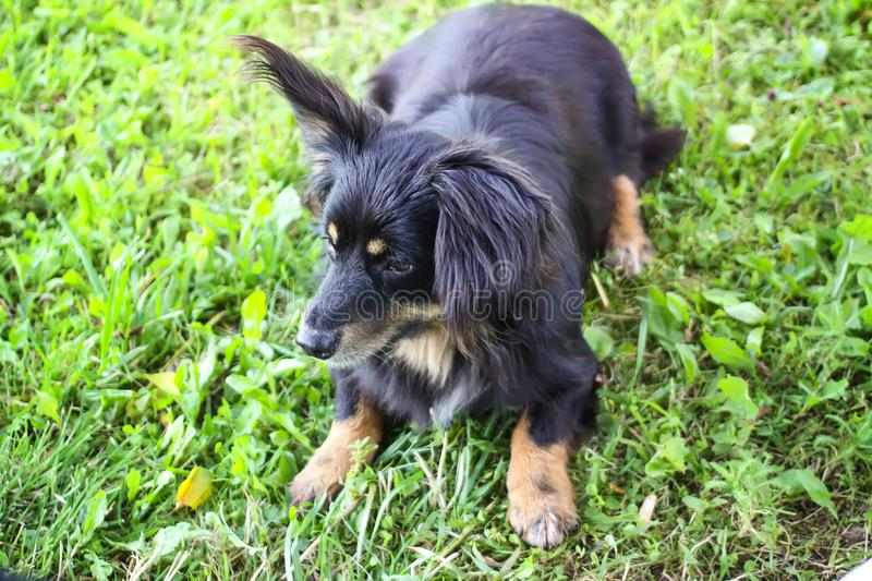 Young dog outdoors. stock photo