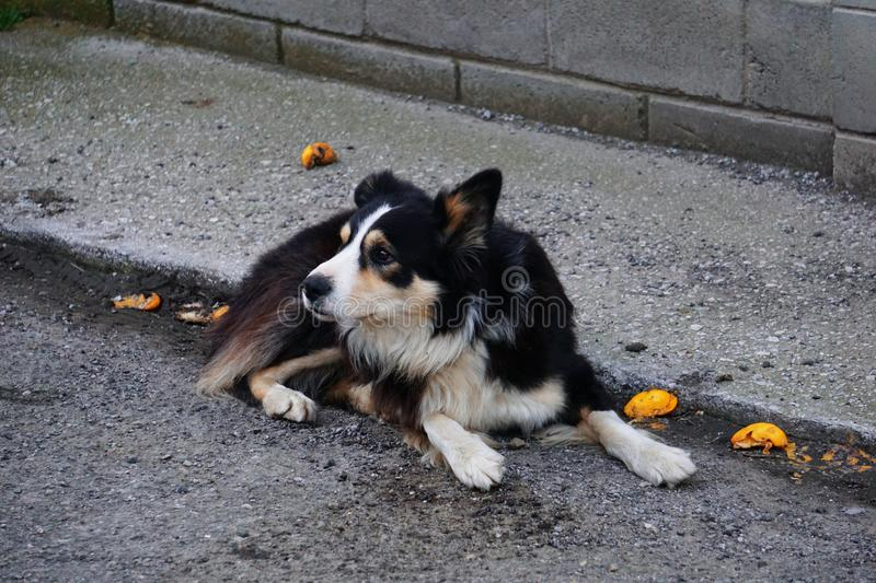 Young dog resting in a village. royalty free stock photo