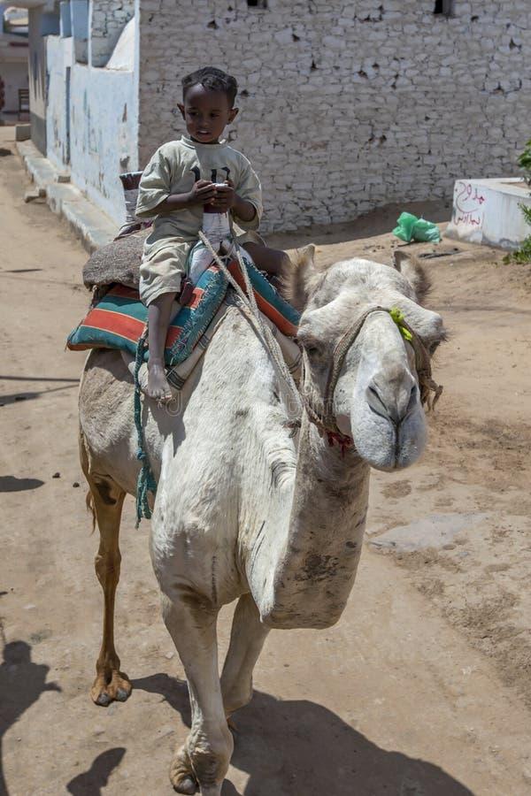 A young Egyptian boy rides a camel. royalty free stock photos