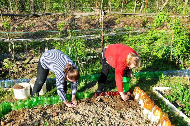 Young and elderly women are working in the garden stock photo