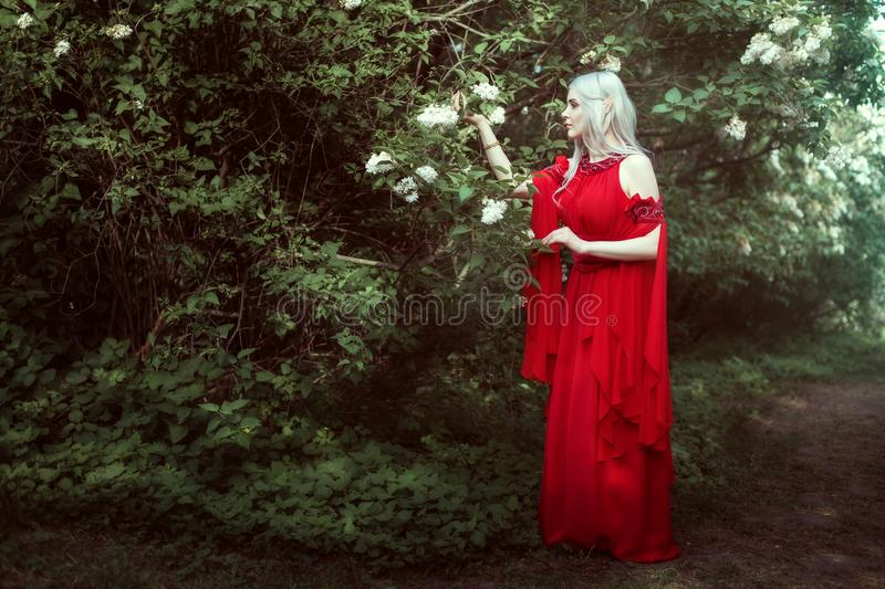 Young elf woman in a fairy forest. royalty free stock photography