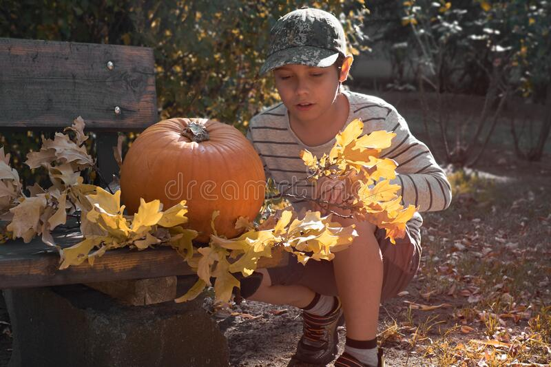 Young european boy in stripy short decorates large Halloween pumpkin with yellow Autumn leaves. Young european boy in stripy short decorates large Halloween royalty free stock photo