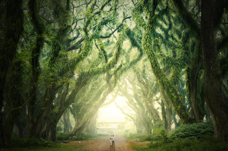 Young family looking at huge branches of trees stock photo
