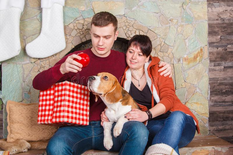 Young family playing with pretty beagle dog near fireplace stock photo