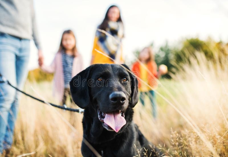 A young family with two small children and a dog on a walk in autumn nature. royalty free stock photo