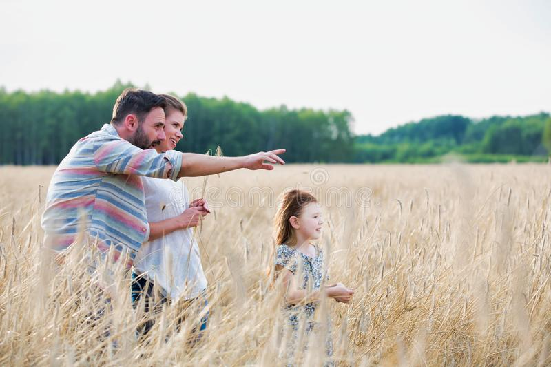Young family walking through a field of corn on a summers day the father is pointing to something in the distance. Photo of Young family walking through a field royalty free stock images