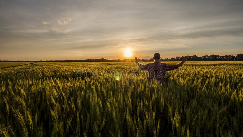 Young farmer admires his wheat field royalty free stock image