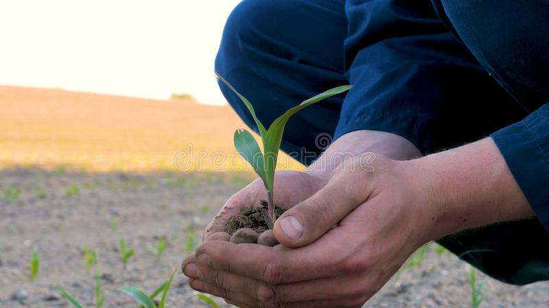 A young farmer in a blue robe is planting a small green sprout, on a field in nature. Concept: clean air, bio, agriculture, freedo. M, food, new life stock images