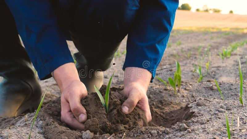 A young farmer in a blue robe is planting a small green sprout, on a field in nature. Concept: clean air, bio, agriculture, freedo. M, food, new life royalty free stock image