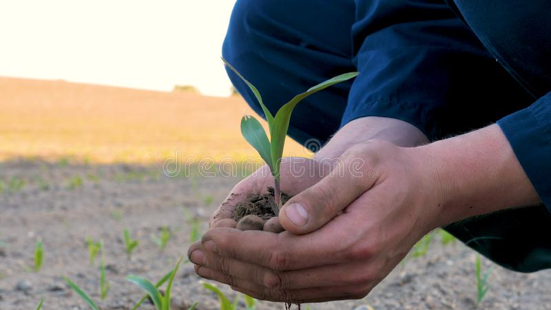 A young farmer in a blue robe is planting a small green sprout, on a field in nature. Concept: clean air, bio, agriculture, freedo. M, food, new life royalty free stock photography