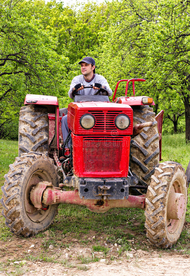 Young farmer driving his tractor. Through a plum trees orchard royalty free stock photos