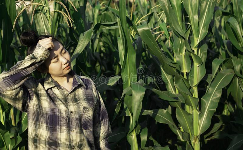 Young farmer heat exhaustion in farm. Young farmer heat exhaustion in corn farm stock photos