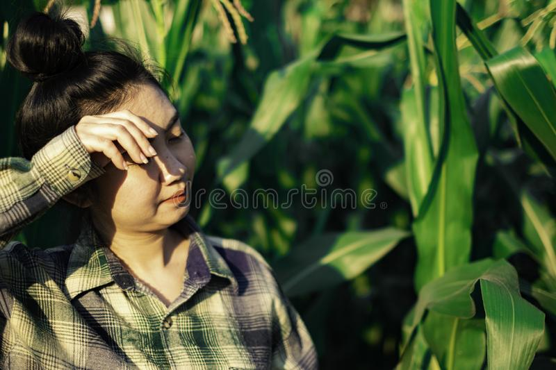 Young farmer heat exhaustion in farm. Young farmer heat exhaustion in corn farm royalty free stock image