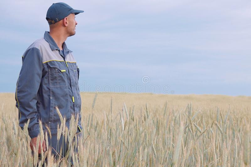Young farmer near a rye field. copy space royalty free stock photos