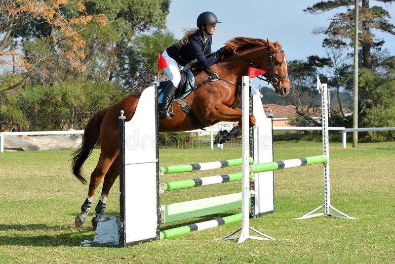 Horse and rider show jumping. A young female Caucasian rider and her chestnut horse show jumping an oxer on a sunny day royalty free stock photography