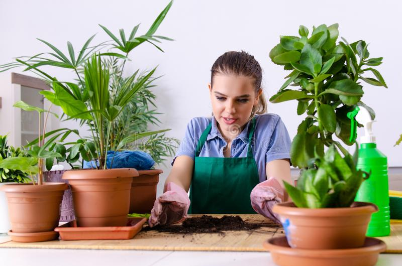 Young female gardener with plants indoors royalty free stock images