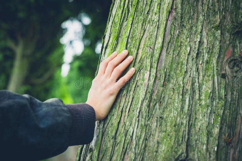 Young female hand resting on tree royalty free stock photos