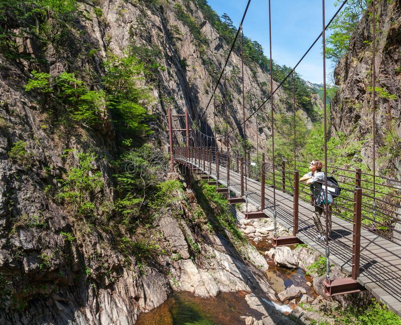 Young female traveler on a bridge under the bridge in Seoraksan National Park in South Korea, a popular destination for travel in royalty free stock photo