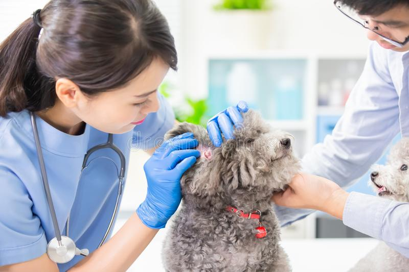 Veterinarian at veterinary clinic stock images