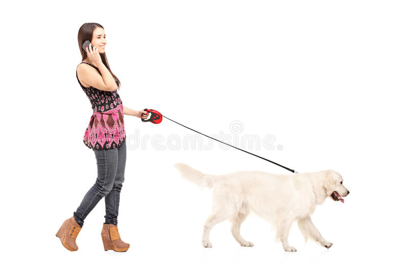 Young female walking her dog and talking on a mobile phone royalty free stock photography