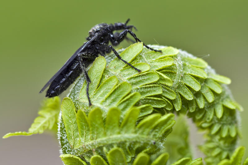 Download Young Fern And Beetle Macro Stock Image - Image: 22161421